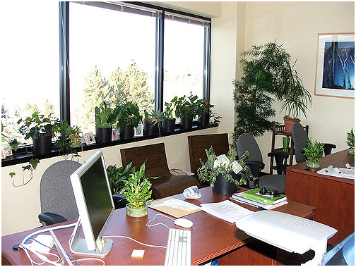 plants-in-the-office-can-boost-productivity