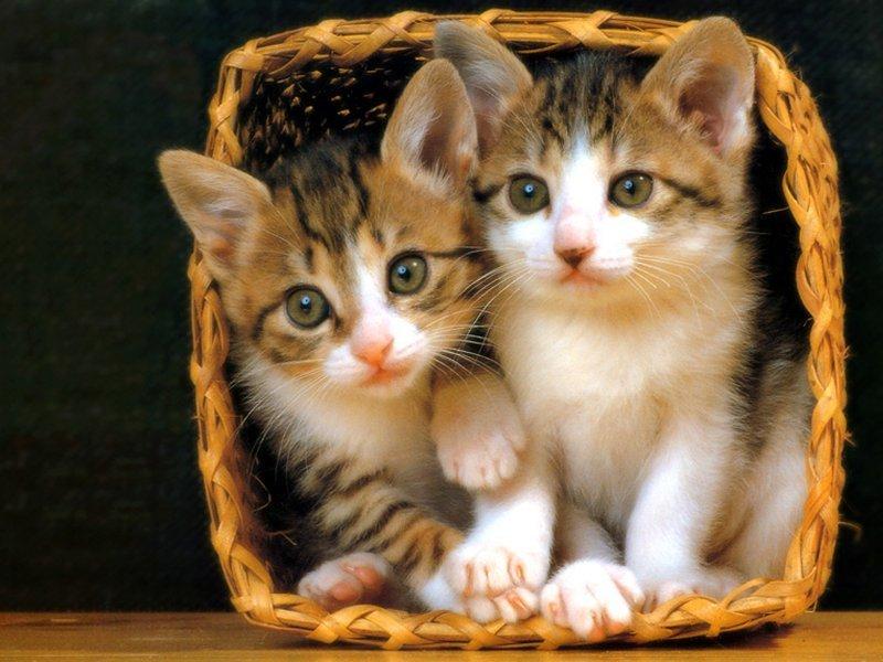 The Basics Of Cat Care Essentials