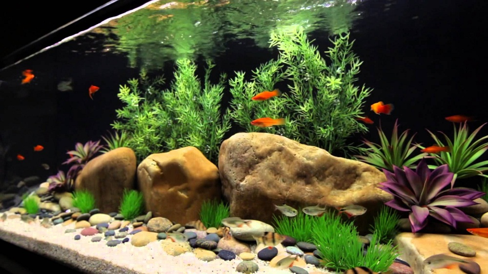 Adding Life To Your Space With Tips In Setting Up Your First Freshwater Aquarium